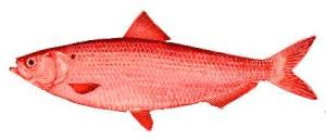 #decent teaching: red herring questions